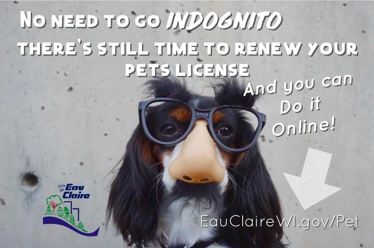 Pet License Renewal - online