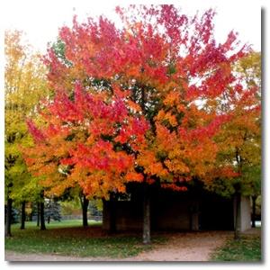 fall_colors_027